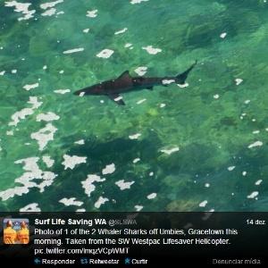 Perfil no Twitter do serviço de salva-vidas da Austrália Ocidental alerta sobre tubarões na costa
