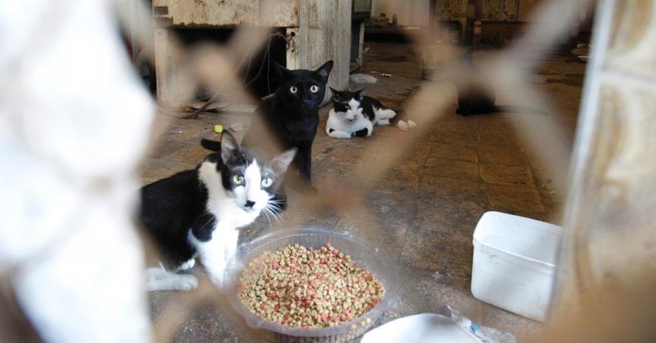 8.jan.2014 - A Polícia Civil promove uma ação nesta quarta-feira (8) para resgatar gatos que estão presos em situação de maus-tratos em um mercado no bairro de Todos os Santos, zona norte da capital fluminense