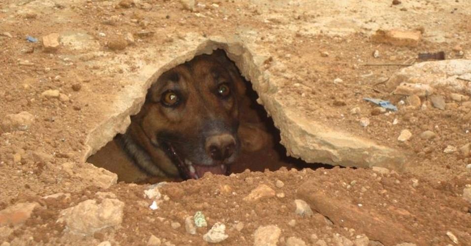 8.jan.2014 - Betty Boop, uma cadela de 6 anos, chamou a atenção nesta quarta-feira no interior de Minas Gerais. Ela cavou um buraco de de 1,5 metro no chão do quintal de casa e tem passado os dias lá dentro. Segundo a dona, Betty nunca gostou de casinhas para cachorros