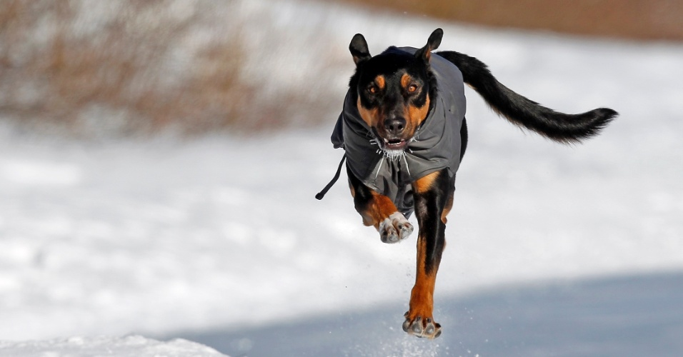 8.jan.2014 - O cão Aldo salta pela neve enquanto corre para o seu dono, Cyril River, que patina em um lago das ilhas em Minneapolis, nos Estados Unidos, nesta quarta-feira (8). Subiu para 21 o número de mortos por conta da onda de frio polar que atinge boa parte dos Estados Unidos. A maioria das vítimas perdeu a vida em acidentes em estradas com pistas escorregadias por conta da neve, mas algumas pessoas morreram por congelamento