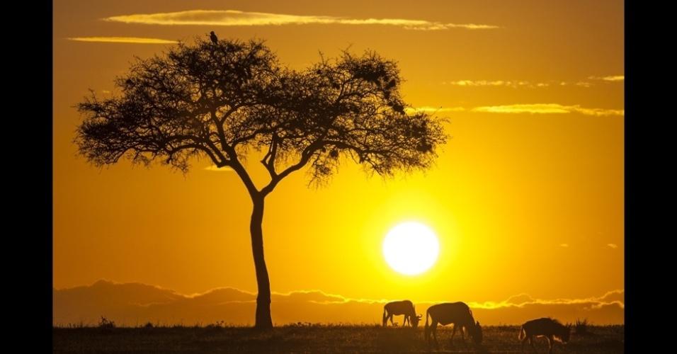 10.jan.2014 - Esta foto de uma acácia e gnus pastando sob o pôr do sol na reserva de Masai Mara no Quênia foi feita por Florentina Tilvic