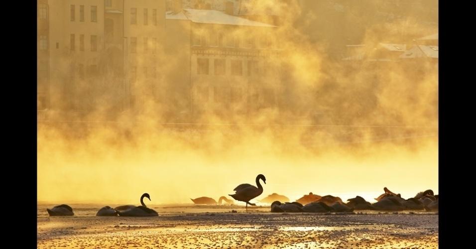 10.jan.2014 - Esta foto feita por Jaromir Chalabala de uma madrugada fria em Praga. A silhueta dos cisnes no river Vltava aparece envolta em neblina misteriosa