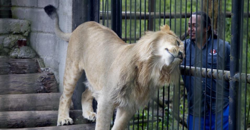 13.jan.2014 - Um filhote de leão é acariciado por um guarda no zoológico Metropolitano Rosy Walter, em Tegucigalpa, Honduras, onde foi inaugurada a primeira fase do Centro Nacional de Conservação e Recuperação da Fauna Silvestre, que tem como objetivo melhorar as condições de vida de mais de 400 espécies de animais. A imagem foi tirada no dia 11 e divulgada hoje (13)