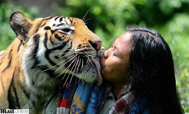20.jan.2014 - Abdllah Sholeh, 33, e Mulan, uma tigresa de seis anos de idade, são conhecidas em um vilarejo da Indonésia por serem as melhores amigas uma da outra. O dono da tigresa pediu que Abdullah tomasse conta de Mulan por um curto período, mas a amizade entre as duas cresceu e hoje são quase inseparáveis