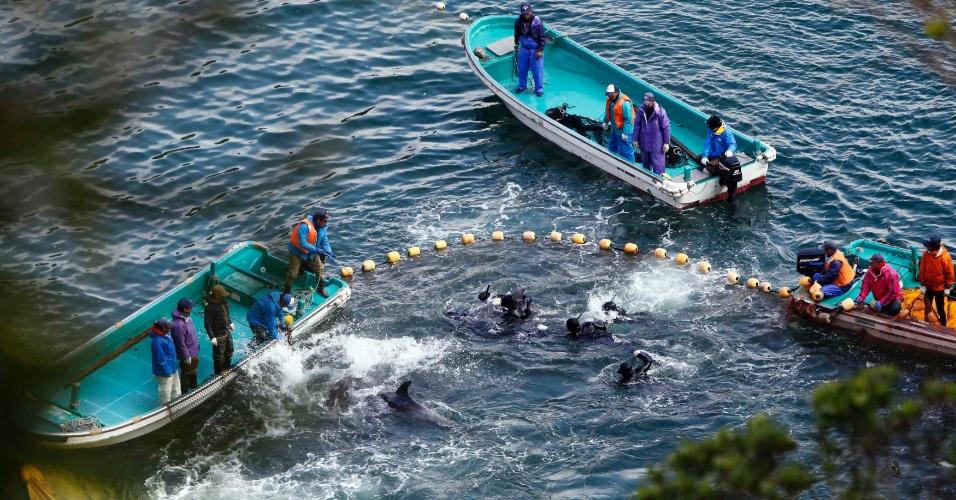 """20.jan.2014 - Pescadores japoneses caçam golfinhos em Taiji, no oeste do Japão. Em uma manifestação que causou surpresa no meio diplomático, a embaixadora americana no país, Caroline Kennedy, expressou, publicamente, profunda preocupação em relação à prática, tida como tradicional. A caçada de golfinhos no Japão vem causando controvérsia há muito tempo e já tema do documentário """"The Cove"""", ganhador do Oscar na categoria de melhor documentário"""