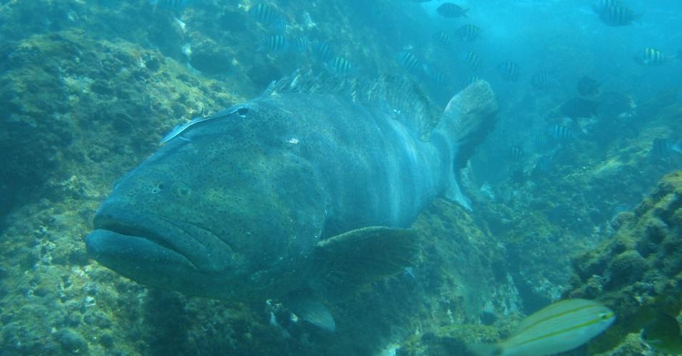 Mergulhadores flagram pesca ilegal de peixe ameaçado de extinção no RJ