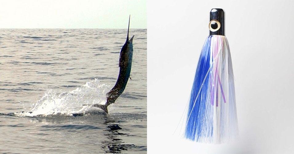 As iscas tipo lula maiores são são próprias para a pesca de superfície a cerca de 80 km da costa, onde se encontra espécies como o peixe-bandeira (imagem) e o marlin, que pode chegar a 800 kg.  Na imagem, uma isca de 32 cm da marca Iland Lures, que custa cerca de R$ 200