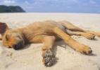 Clique Ciência: Animais podem se bronzear ou o sol faz mal para os pets? (Foto: Thinkstock)