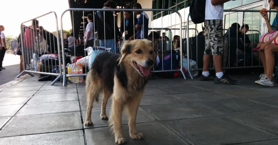 Cachorro passeia em frente à fila da Campus Party 2014. O animal não é dos campuseiros; a segurança não sabe informar se o animal vive no Anhembi. O evento reúne fãs de tecnologia que aproveitam uma conexão de 40 Gbps (Gigabits por segundo)