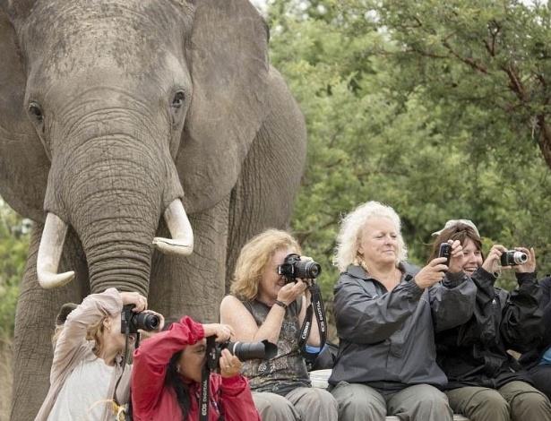 Um grupo de turistas estava em um parque no Zimbábue tirando fotos no final de um programa voluntário na reserva de Imire, que cuida de animais selvagens, quando sofreu o ''photobomb'' acima. O elefante chamado Makavhuzi apareceu de surpresa na foto tirada pelo voluntário Marcus Söderlund, 24. ''Depois, elas perceberam a presença dele [Makavhuzi], se viraram e reagiram com risos e olhares surpresos'', disse Söderlund ao ''Daily Mail''