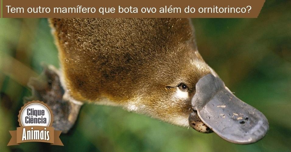 Clique Ciência: Animais: Há outros mamíferos que botam ovo?