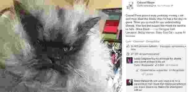 d4667afb155b8 Dona anuncia morte de Colonel Meow, gato que virou celebridade na internet