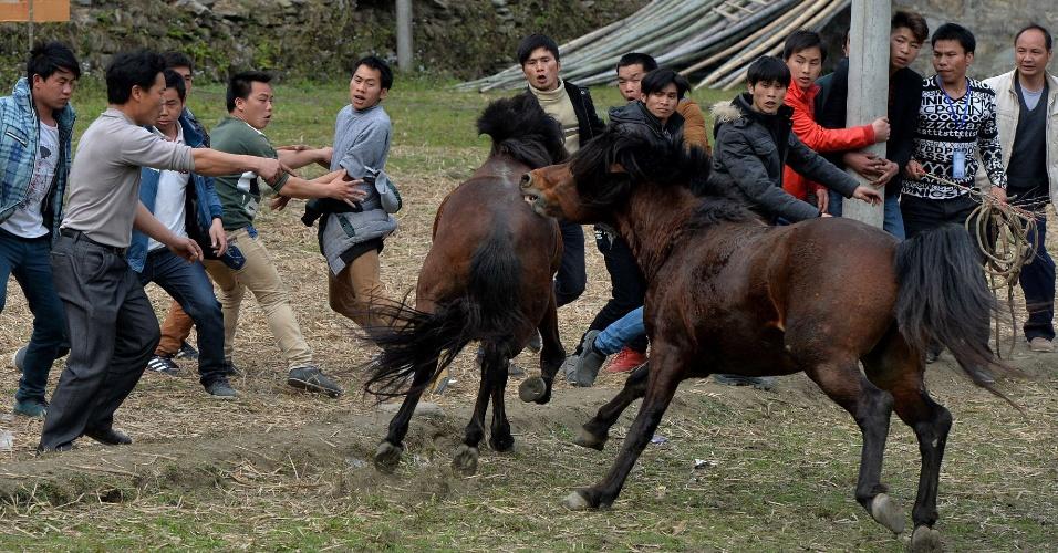 2.fev.2014 - Chineses participam de tradicional luta entre cavalos, em Tiantou, em comemoração pela entrada ano do cavalo pelo calendário lunar