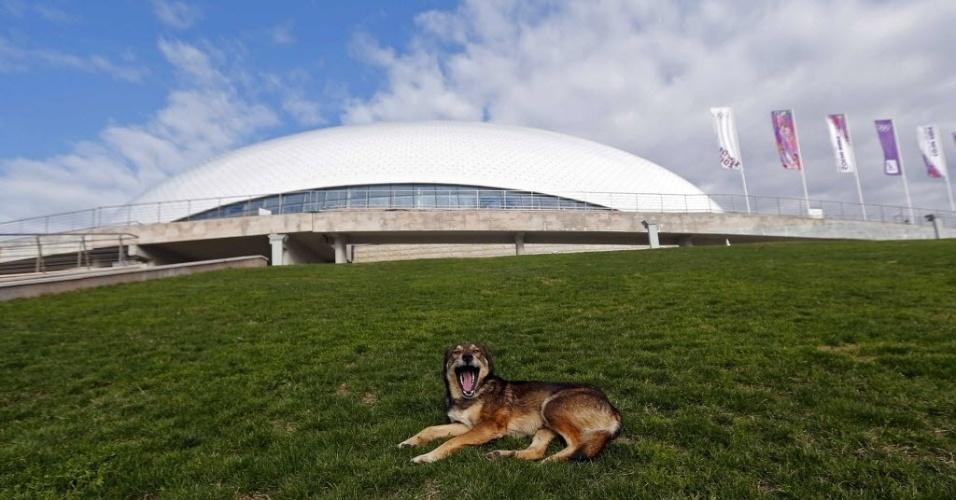 5.fev.2014 - Cão de rua descansa na grama em frente ao estádio Bolshoi, no parque olímpico de Sochi. Moradores da cidade disseram que milhares de cachorros desapareceram das ruas de Sochi desde que uma empresa local de controle de pragas fechou um contrato para capturar os cães antes do início dos Jogos Olímpicos de Inverno