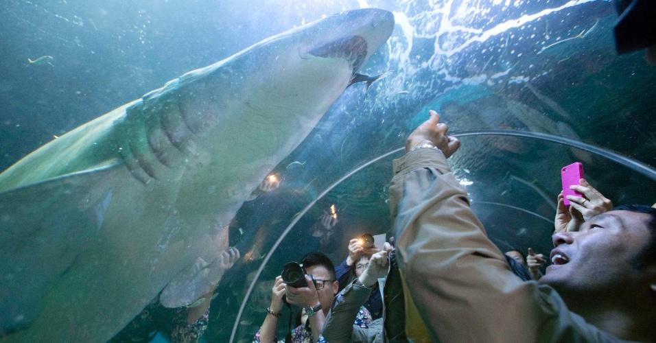 Cientistas querem manipular sentido de tubarão para evitar ataques a humanos