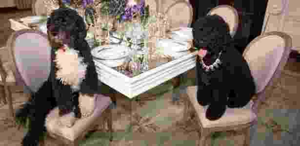 11.fev.2014 - Sunny e Bo sentados a mesa de jantar na Casa Branca. Barack Obama escolheu essa raça de cachorro por ser recomendada para pessoas com alergia, como Malia, a filha mais velha do presidente - Reprodução/Twitter/Casa Branca  - Reprodução/Twitter/Casa Branca