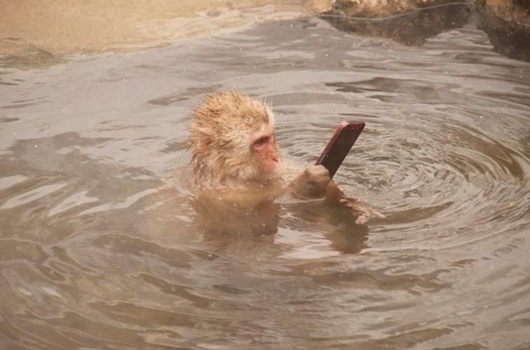 11.fev.2014 - Tranquilo e descansando nas águas de uma fonte termal, um macaco no Japão segura um smartphone tal qual fazemos quando assistimos a um vídeo ou lemos uma notícia. A foto que circula na internet foi publicada pelo site japonês Byokan Sunday e reproduzida pelo blog Rocketnews 24 mostra. Aparentemente, ele segura um iPhone (que algum humano deixou cair no lago). O macaco é bem parecido com os do parque Jigokudani, na cidade de Yamanouchi, em Nagano. Porém, não há informações sobre o local exato ou autor da foto curiosa