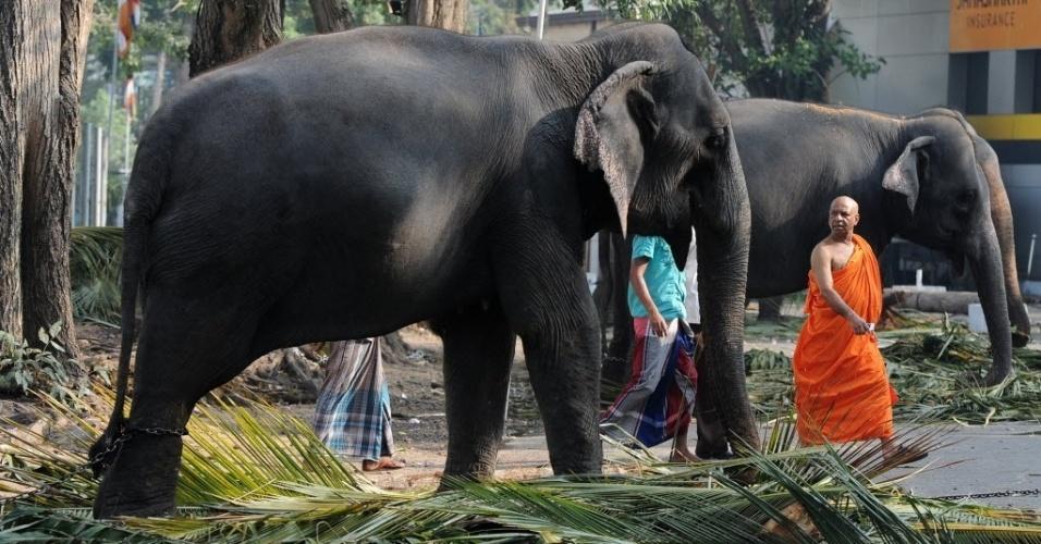 14.fev.2014 - Monges budistas caminham com elefantes em procissão religiosa em Colombo, no Sri Lanka. Cerca de 70 elefantes e milhares de músicos, dançarinos e monges se reuniram na cidade para participar da maior procissão budista do país, que tem duração de dois dias e acontece desde 1979
