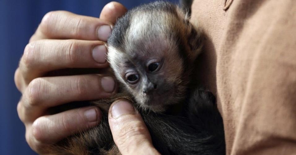 14.fev.2014 - Turista segura filhote de macaco salvo de enchente do rio Beni em Rurrenabaque, na Bolívia. O país continua sofrendo com as enchentes que atingem diversas regiões bolivianas