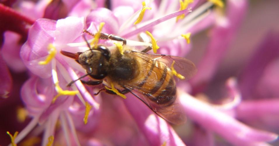Cada colmeia do tipo das que são usadas n a polinização de lavouras é formada por cerca de 50 mil abelhas que, de acordo com o agrônomo Afonso Inácio Orth, da Ufscar, são principalmente africanas (Apis mellifera scutellata)