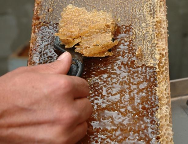 Segundo dados do IBGE de 2012, os dois Estados que mais produzem maçãs também são os que mais produzem mel. Juntos, Santa Catarina e Rio Grande do Sul produzem 11,2 mil toneladas de mel e 1,28 milhões de toneladas de maçã, que são a polinizadas por abelhas