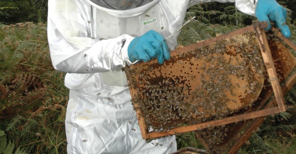 Agricultores estão contratando criadores de abelha --também chamados de apicultores-- que alugam suas colmeias para a polinização das plantações na época em que florescem. Somente no Sul do país, a estimativa é de que 60 mil colmeias sejam alugadas todo ano para a produção de maçã. Clique na imagem para saber mais