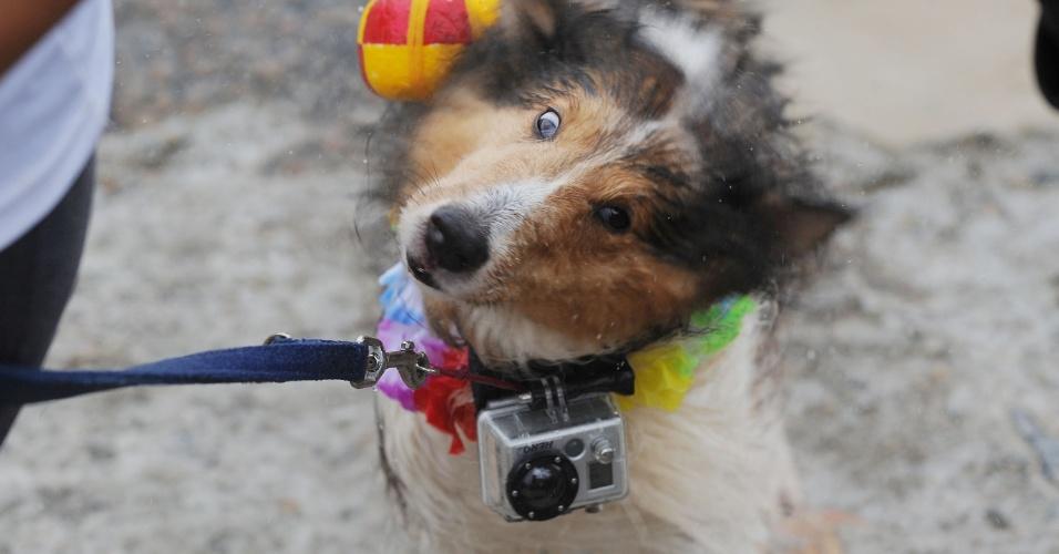 16.fev.2014 - Donos esportistas e seus cães participam do campeonato Stand Up Dogs, neste domingo (16), no Quebra-Mar da Barra da Tijuca, no Rio de Janeiro. A modalidade é uma variação do stand up paddle, modalidade em que se fica em pé em cima de uma prancha usando um remo para locomoção, mas junto com o cachorro