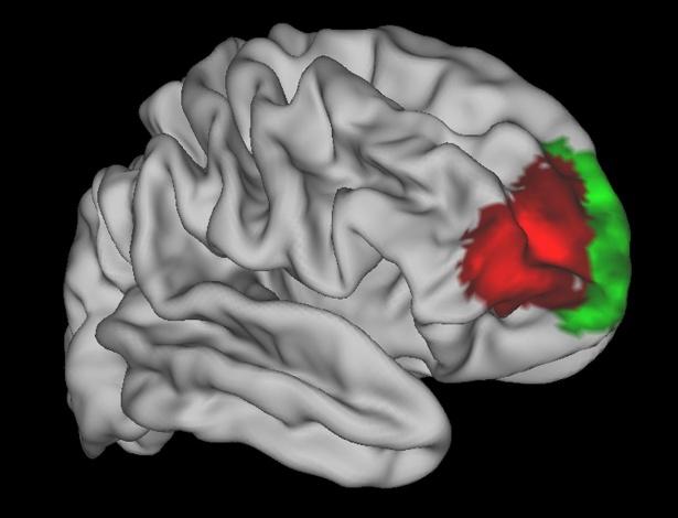 Imagem mostra área do córtex frontal do cérebro em vermelho: região que parece ser exclusiva de humanos - Universidade Oxford