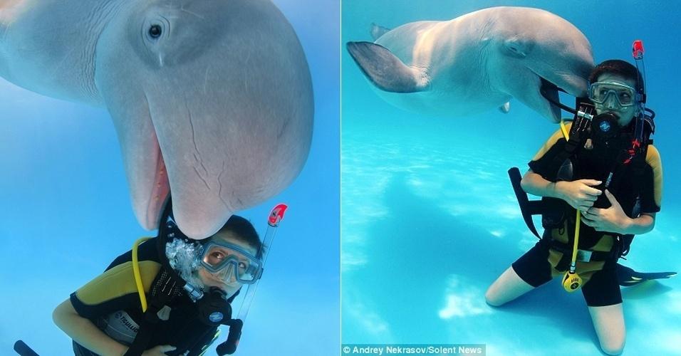 """Neste photobomb aquático, o fotógrafo Andrey Nekrasov, 42, capturou imagens da baleia beluga que insistiu em sem """"intrometer"""" nas fotos. Os registros foram feitos quando Nekrasov e seu filho mergulhavam em uma piscina de 6 metros de profundidade em um parque de atrações marinhas em Odessa (Ucrânia)"""