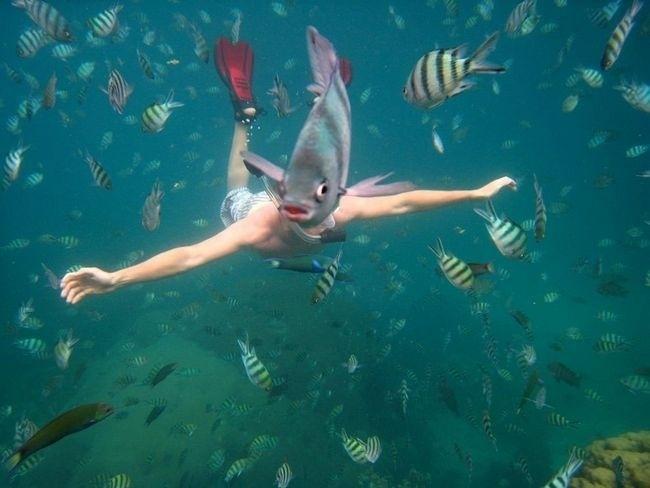 19.fev.2014 - Você sabia que peixe tem corpão e usa pé de pato?