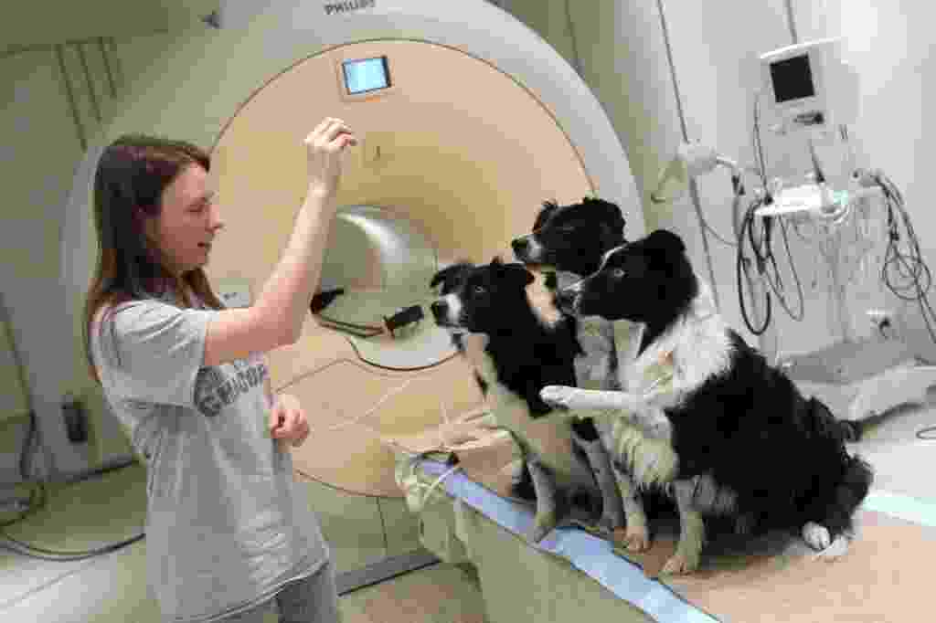 20.fev.2014 - Na foto divulgada nesta quinta-feira (20), a dona Dora Kettinger fala com seus cães depois de uma análise em uma clínica de neurologia, em Budapeste, no dia 09 de fevereiro - Bernadett Szabo/Reuters