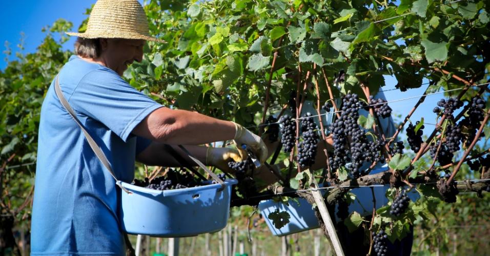 A uva pinot noir, assim como a chardonnay, é bastante utilizada na produção de espumantes. Esta variedade é doce, de casca mais firme e costuma render vinhos de paladar mais leve