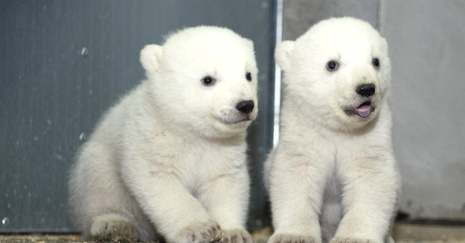 26.fev.2014 - Ursos polares gêmeos são vistos em zoológico de Munique, Alemanha
