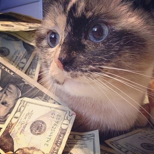 """O perfil @CashCatz é uma conta colaborativa com imagens de gatos ostentando a riqueza de seus donos -- geralmente cédulas, itens de luxo e carros. Quem quiser que seu gato apareça nela, basta tirar uma foto dele (imagens com humanos no enquadramento não são aceitas) com itens de luxo e enviar para o site """"CashCatz"""""""