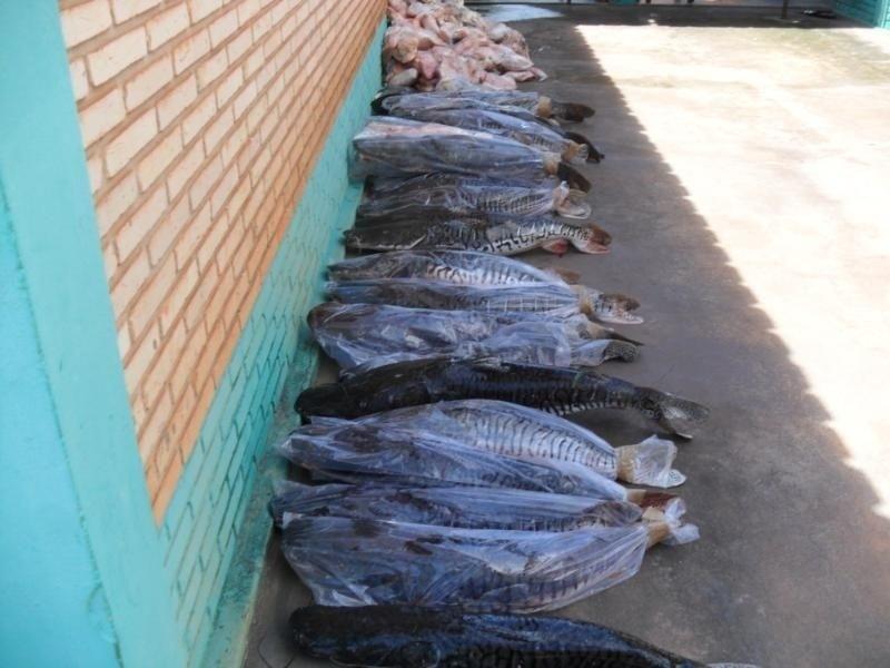 28.fev.2014 - Um total de 646 quilos de pescado foi apreendido em uma casa aparentemente abandonada em propriedade rural em Rancho da Vida, no Mato Grosso, nesta sexta-feira (28). O Juvam (Juizado Volante Ambiental de Cáceres) encontrou o material após denúncias de pesca irregular