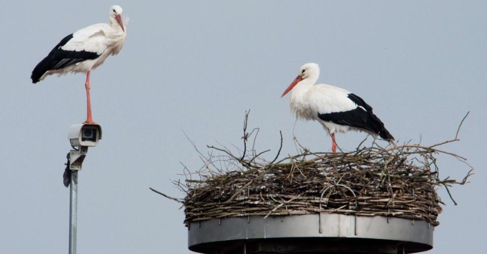 28.fev.2014 - Uma cegonha branca permanece em cima de uma câmera de vigilância próximo a um ninho no telhado de uma casa em Auhagen, na Alemanha, nesta sexta-feira (28)