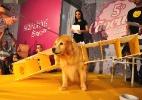 Cães esbanjam fofura em concurso de fantasia de SP - Cris Faga / Fox Press Photo / Agência O Globo