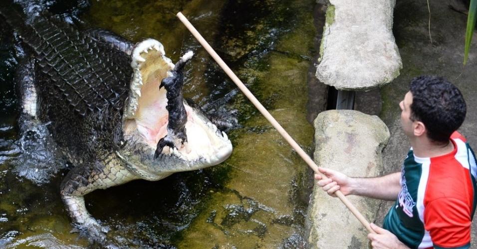 3.mar.2014 - Rex, um crocodilo de água salgada de 700 kg, saltou para comer um coelho, no zoológico Sydney Wildlife, em Sydney, nesta segunda-feira (3)