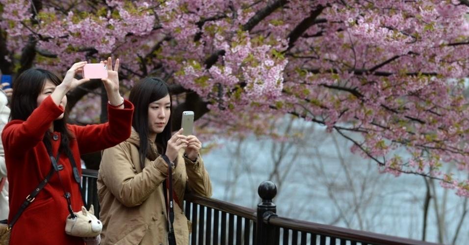 5.mar.2014 - Turistas tiram fotos de cerejeiras que estão florescendo em Shizuoka, no Japão