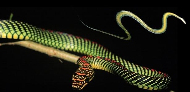 Cientistas desvendam segredo das cobras para deslizar sobre o chão