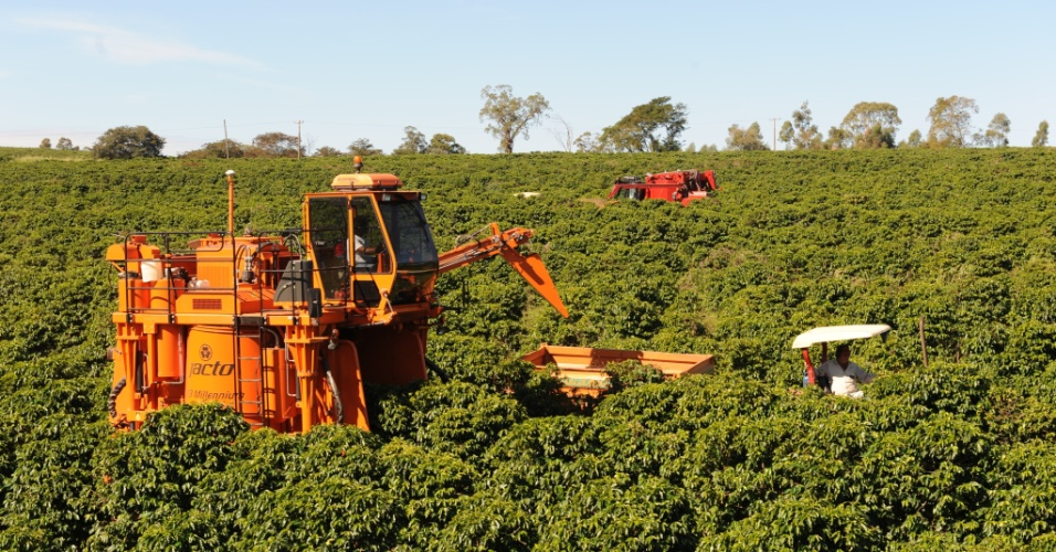 colheita de café na empresa O'Coffee, em Pedregulho (SP)