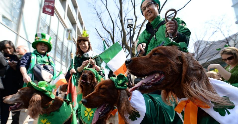 16.mar.2014 - Cães são fantasiados para o St. Patrick's Day em Tóquio, no Japão. A festa do dia de São Patrício é tradicional na Irlanda no dia 17 de março, mas acontece no mundo todo. As pessoas se vestem de verde, dançam e bebem cervejas ou drinques verdes para festejar