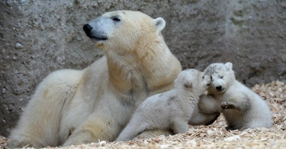 19.mar.2014 -  Filhotes de urso polar brincam com a mãe em primeira aparição no zoológico Hellabrunn, em Munique, Alemanha