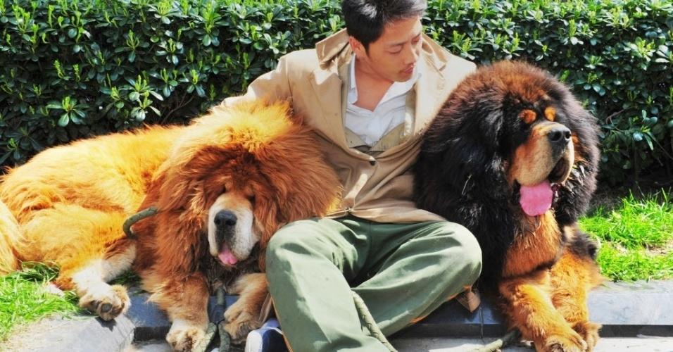 19.mar.2014 - Homem posa com mastim tibetano que foi vendido na China por quase dois milhões de dólares, uma das maiores quantias pagas por um cão no mundo, segundo a imprensa chinesa
