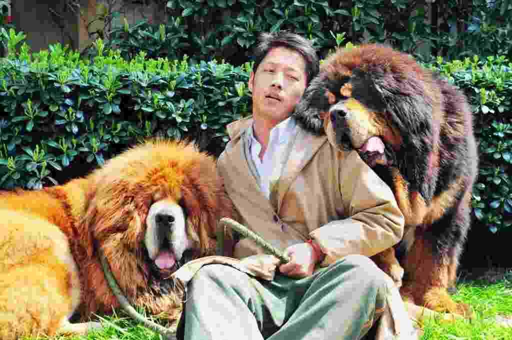 19.mar.2014 - Homem posa com mastim tibetano que foi vendido na China por quase dois milhões de dólares, uma das maiores quantias pagas por um cão no mundo, segundo a imprensa chinesa - AFP