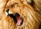 Morre aos 74 publicitário que criou Leão do imposto e baixinho da Kaiser (Foto: Getty Images/iStockphoto)