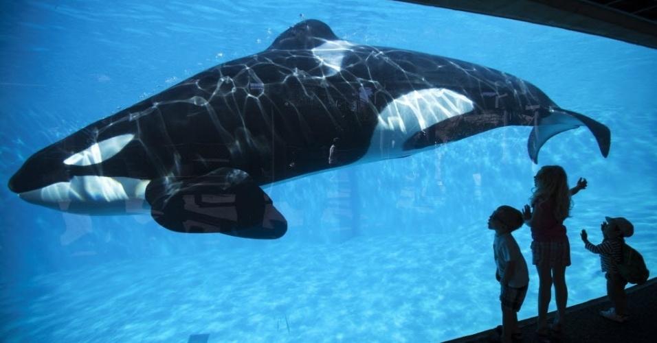 20.mar.2014 - Crianças observam baleia durante visita ao parque SeaWorld, em San Diego, nos Estados Unidos