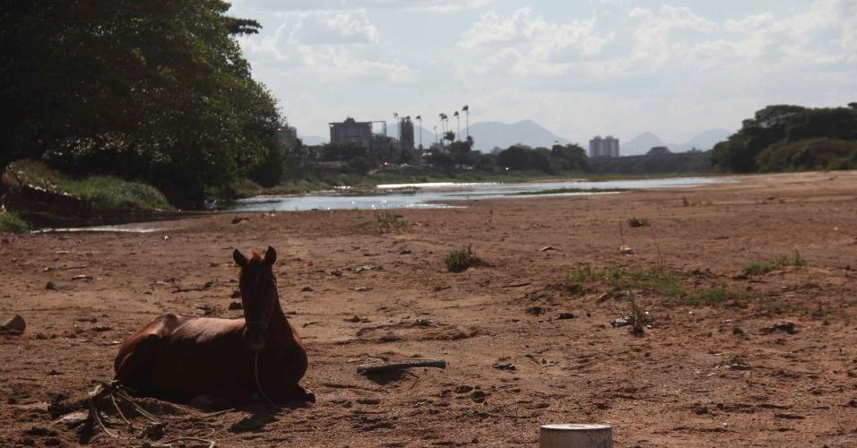 20.mar.2014 - Foto mostra um cavalo deitado em local que costuma ser banhado pelo rio Paraíba do Sul, que enfrenta seca, no Rio de Janeiro