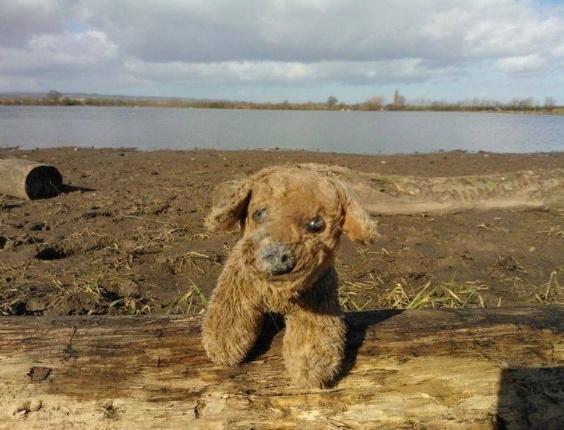 24.mar.2014 - Este cachorro de pelúcia foi um pedido especial, pois foi encontrado após um dilúvio em North Curry, Somerset, no Reino Unido, e as pessoas que o encontraram o lavaram e o deixaram cheiroso para encontrar seu dono, que acreditam ser uma das crianças que teve a casa afetada pela água