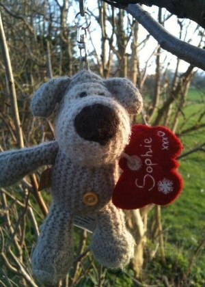 24.mar.2014 - Este cachorro tem mais chances de voltar para sua dona por ter uma etiqueta com o nome dela, Sophie